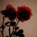 (Day 255) - Crimson