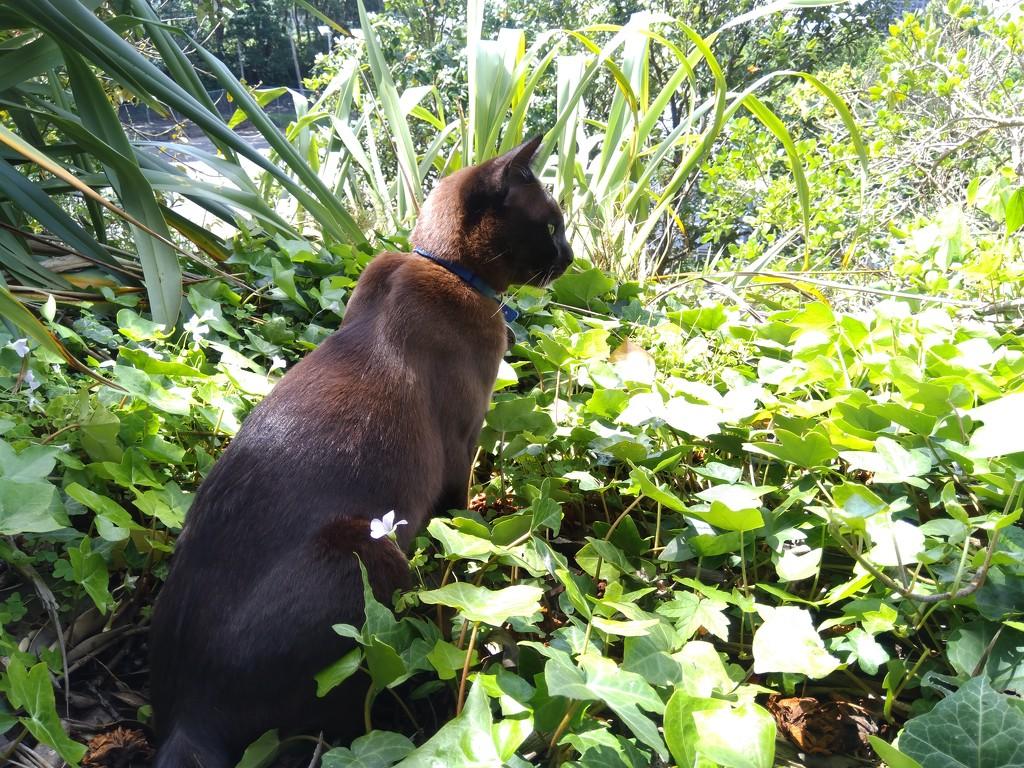 Lunch time cat encounter by yaorenliu