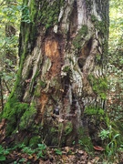 28th Oct 2020 - Just a tree trunk