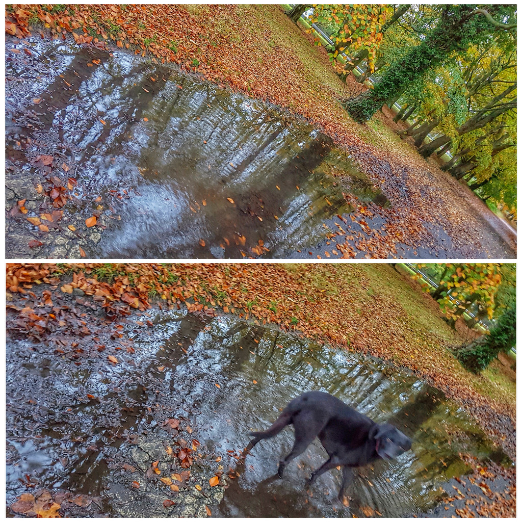 Lots of rain the past few days, but still the colours glow! And Sadie just loves the puddles  by lyndamcg