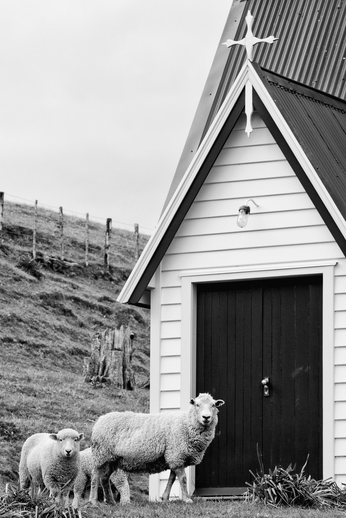 To him the doorkeeper opens, and the sheep hear his voice by helenw2