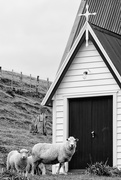 28th Oct 2020 - To him the doorkeeper opens, and the sheep hear his voice