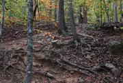 28th Oct 2020 - If It Wasn't Rocks, It was Tree Roots!