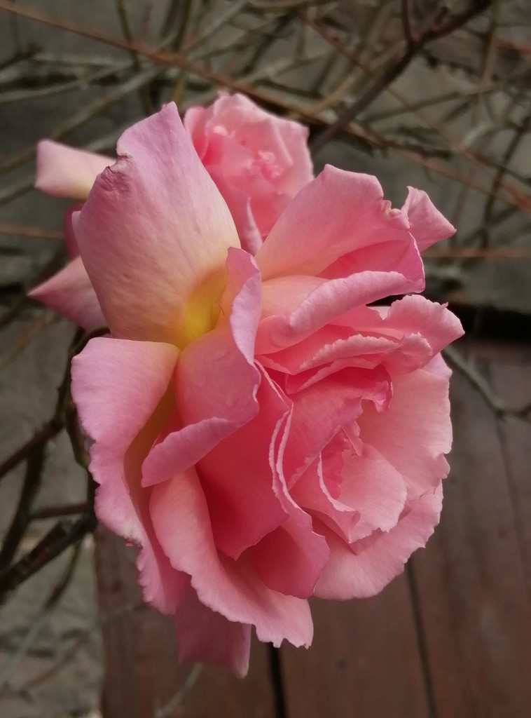 Compassion  by flowerfairyann