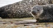 28th Oct 2020 - Leebitton Seal