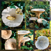 28th Oct 2020 - Funghi