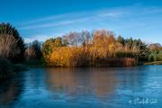 28th Oct 2020 - Autumn in Ringve Botanical Garden