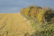 27th Oct 2020 - Autumn hedgerows