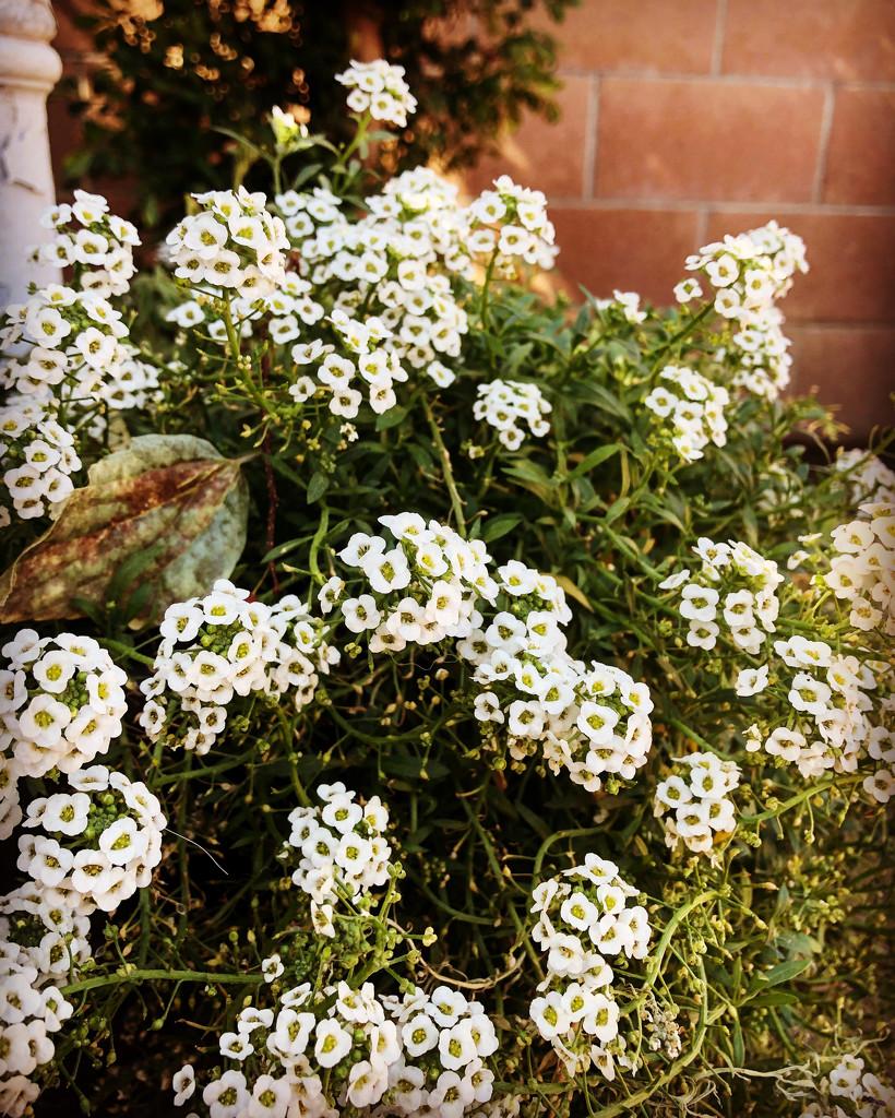 Mary's garden by loweygrace