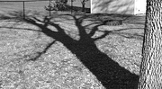 28th Oct 2020 - Afternoon shadow Ash tree B&W
