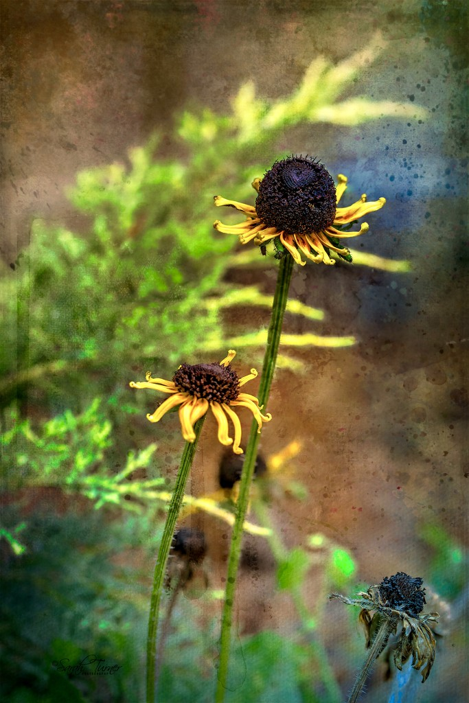 Flowers in the rain  by samae
