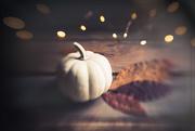 28th Oct 2020 - Just a Little Pumpkin