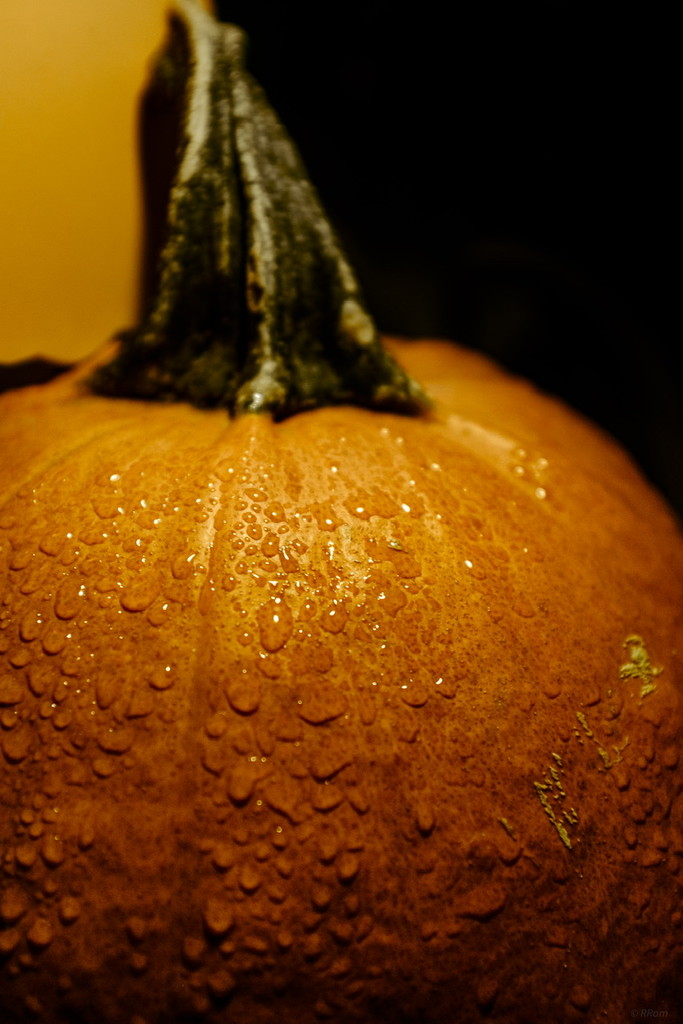 Rain Fall and Pumpkins by ramr