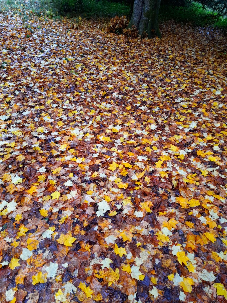Autumn leaves by judithdeacon