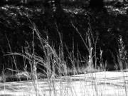 29th Oct 2020 - Broomsedge bluestem - wild grass...