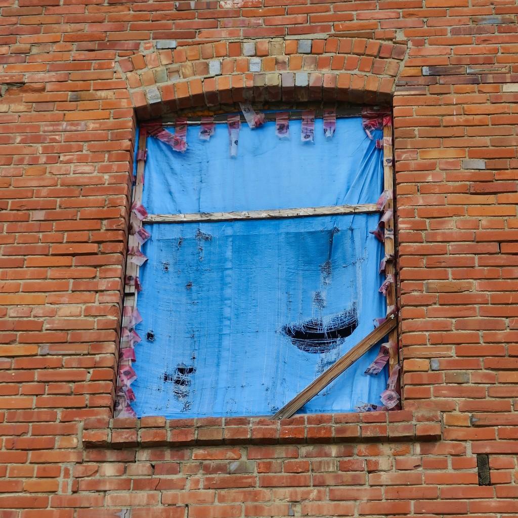 Blue on Brick by rwaterhouse