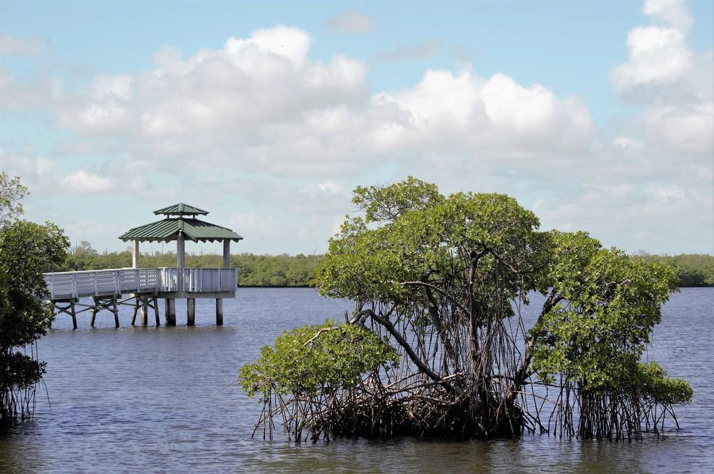 Mangroves by chejja