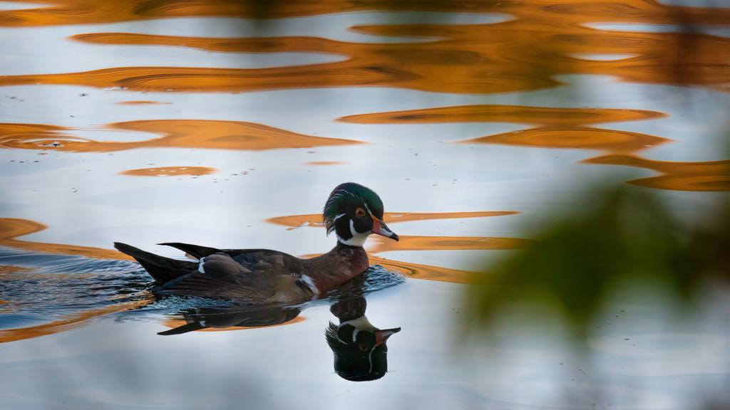 Would Duck? by teriyakih