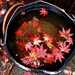 Maple Leaf Soup