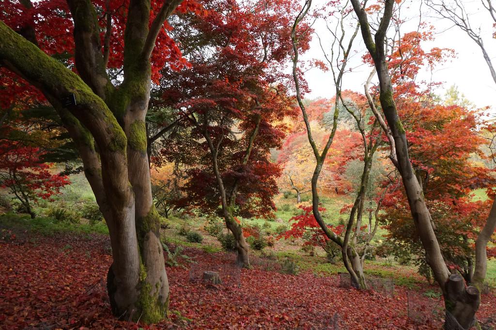 Oct 28th Autumn by valpetersen