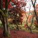 Oct 28th Autumn