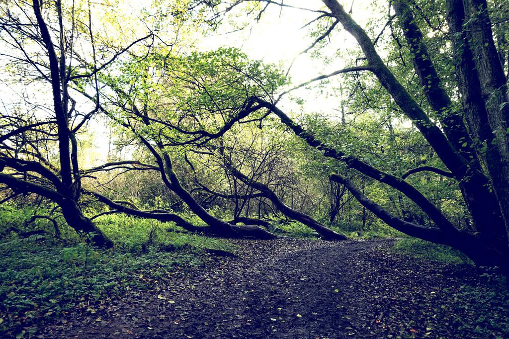 Oct 29th Sarah Marino - Trees at Winkworth by valpetersen