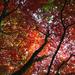 Oct 27th Fiery Autumn