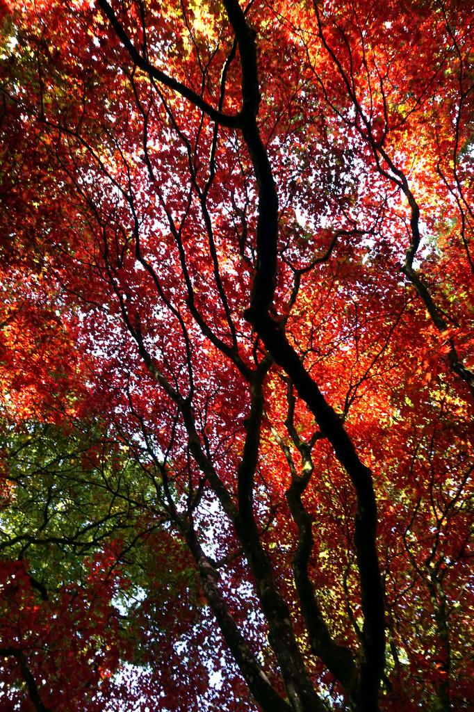 Oct 28th Autumn at Winkworth by valpetersen