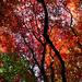 Oct 28th Autumn at Winkworth