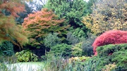 29th Oct 2020 - Beside the Pond