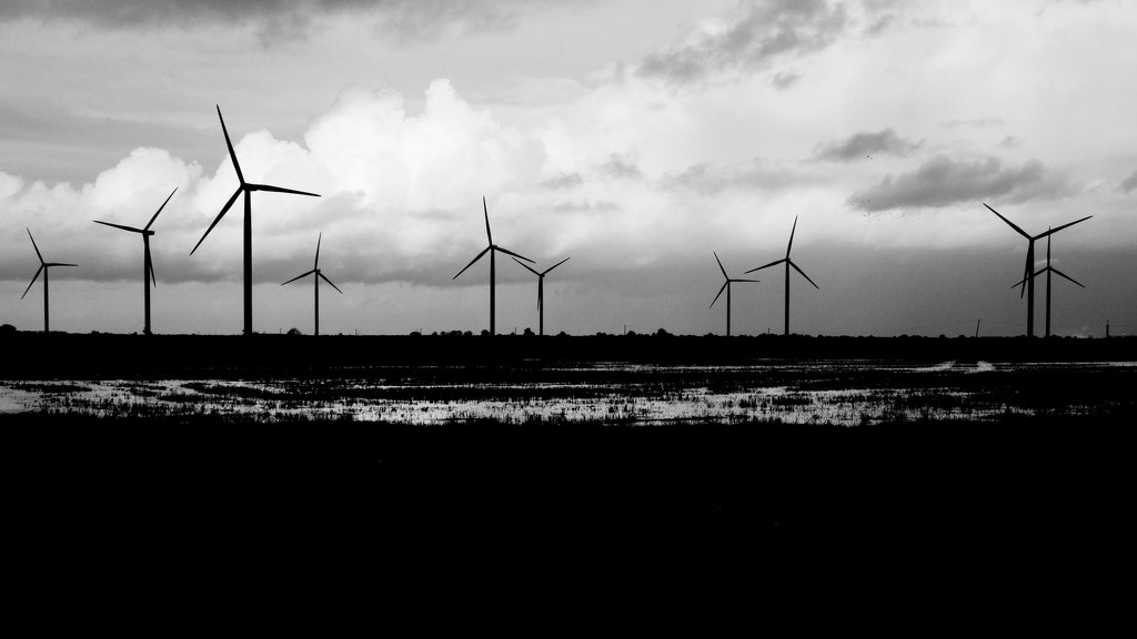 HORIZON OF WINDMILLS by markp