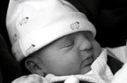 29th Oct 2020 - Meet Baby Willow