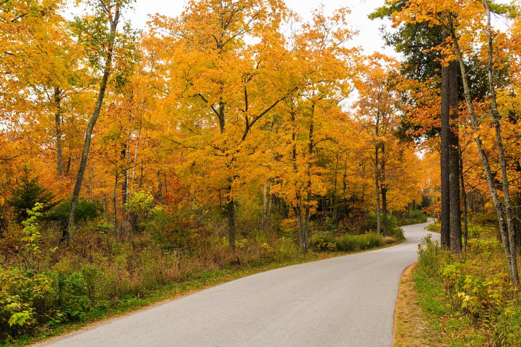 The Road Through Fall by photograndma