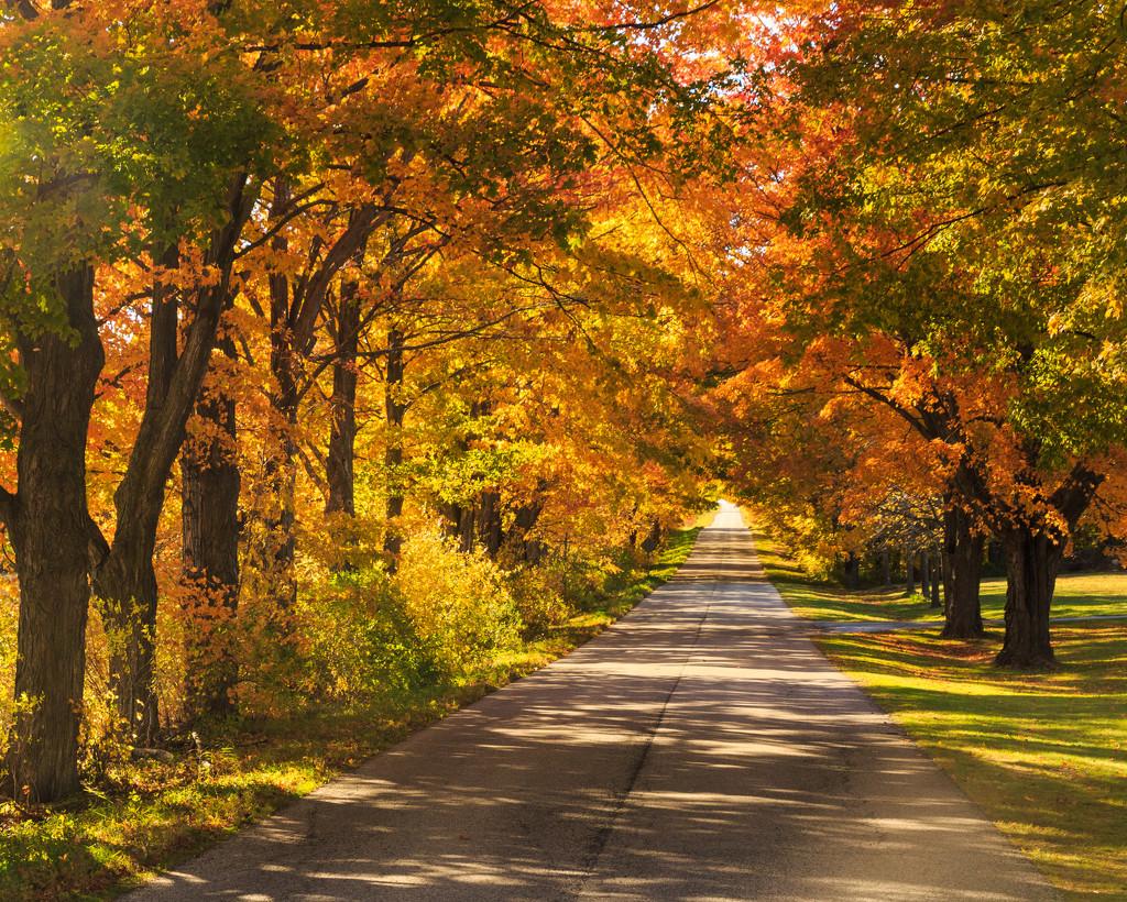 Under the Fall Trees by photograndma