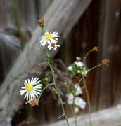 29th Oct 2020 - wildflowers