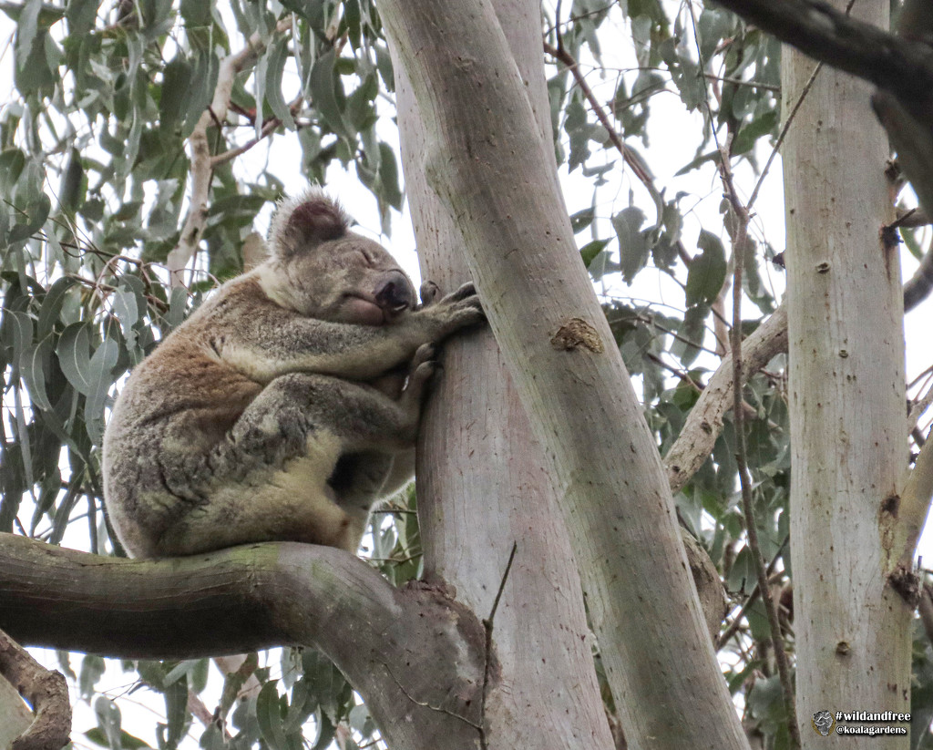 put yer feet up  by koalagardens