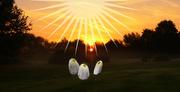 29th Oct 2020 - Mushrooms in the Light