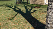 29th Oct 2020 - Afternoon shadow Ash tree
