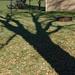 Afternoon shadow Ash tree