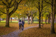 29th Oct 2020 - A Walk in the Park