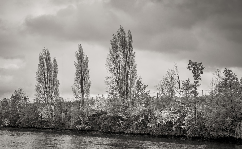 Three Trees... again! by vignouse