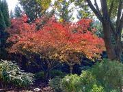 29th Oct 2020 - Dogwood autumn color