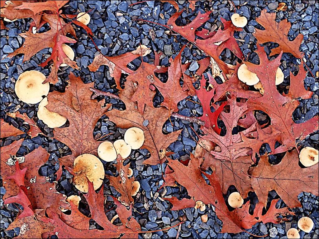 Fall Harvest by olivetreeann