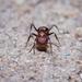 Ant Staredown