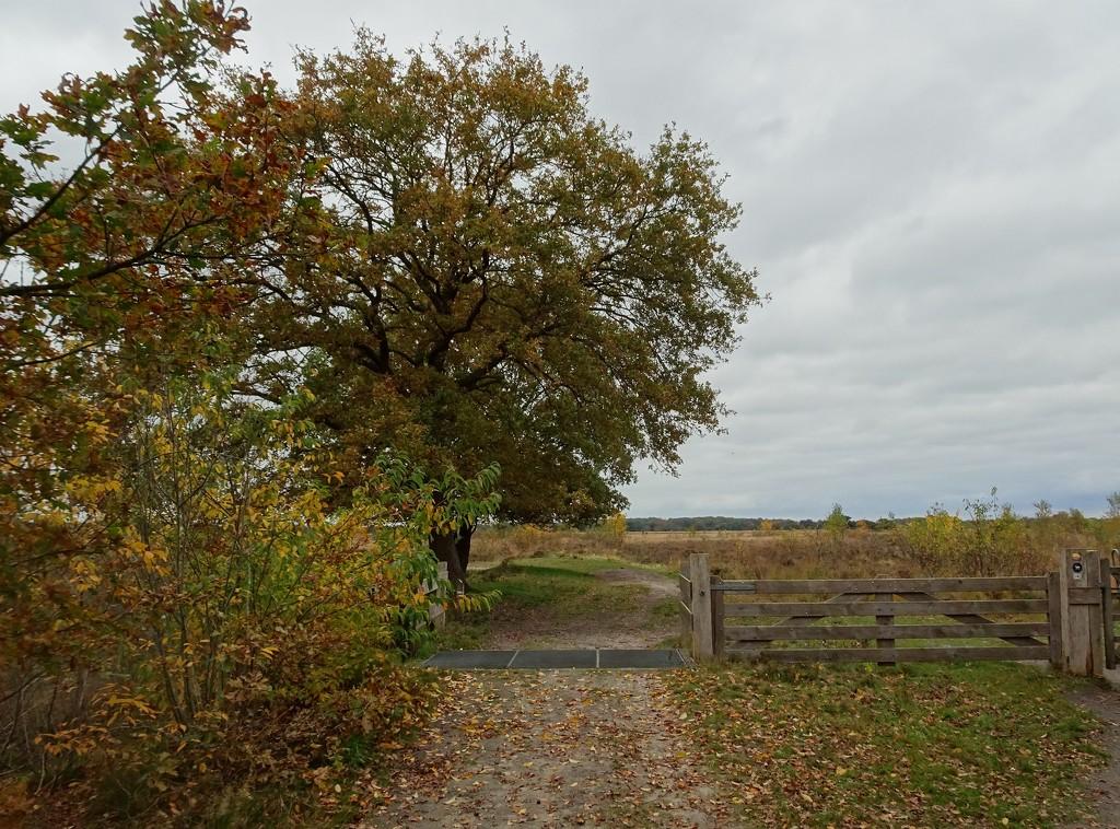 entrance to a nature area by gijsje