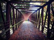 29th Oct 2020 - Raymore Park Bridge