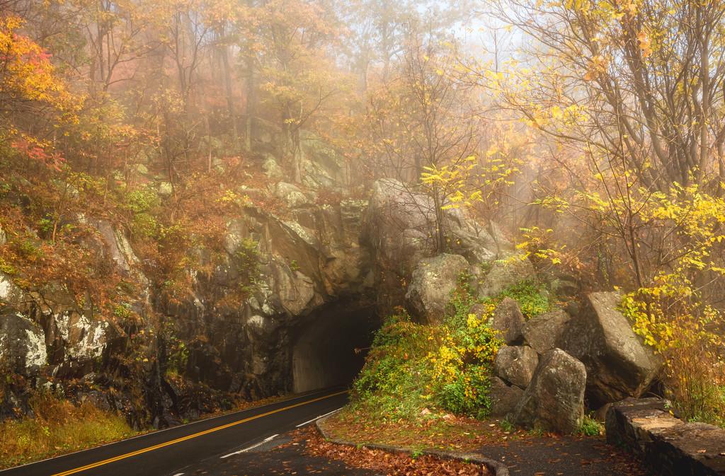 fall tunnel- by myhrhelper