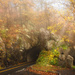 fall tunnel-