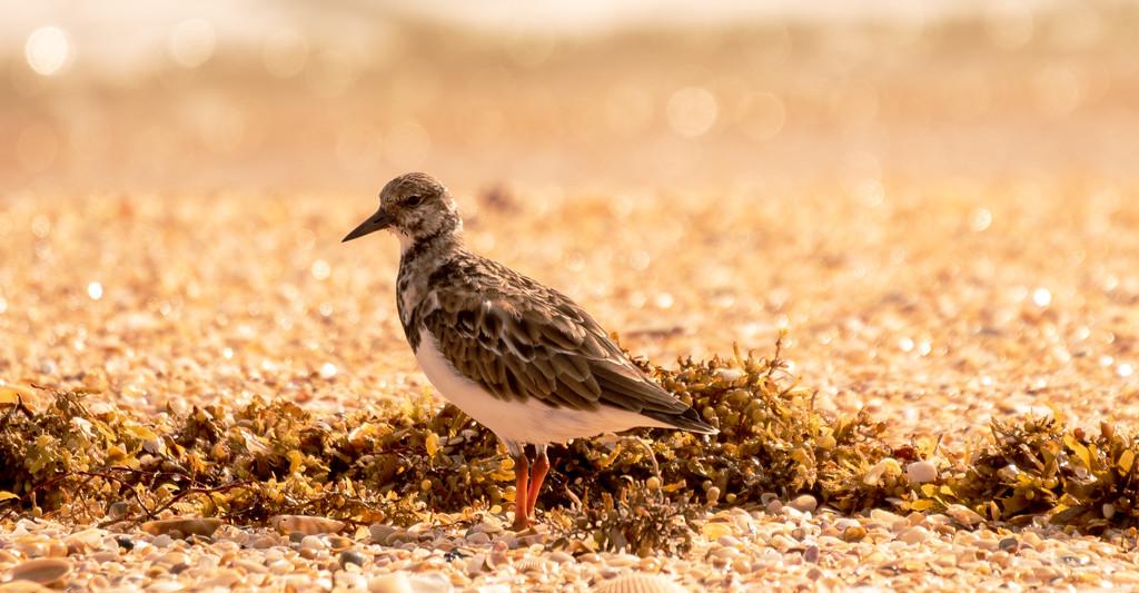 One More Beach Bird! by rickster549