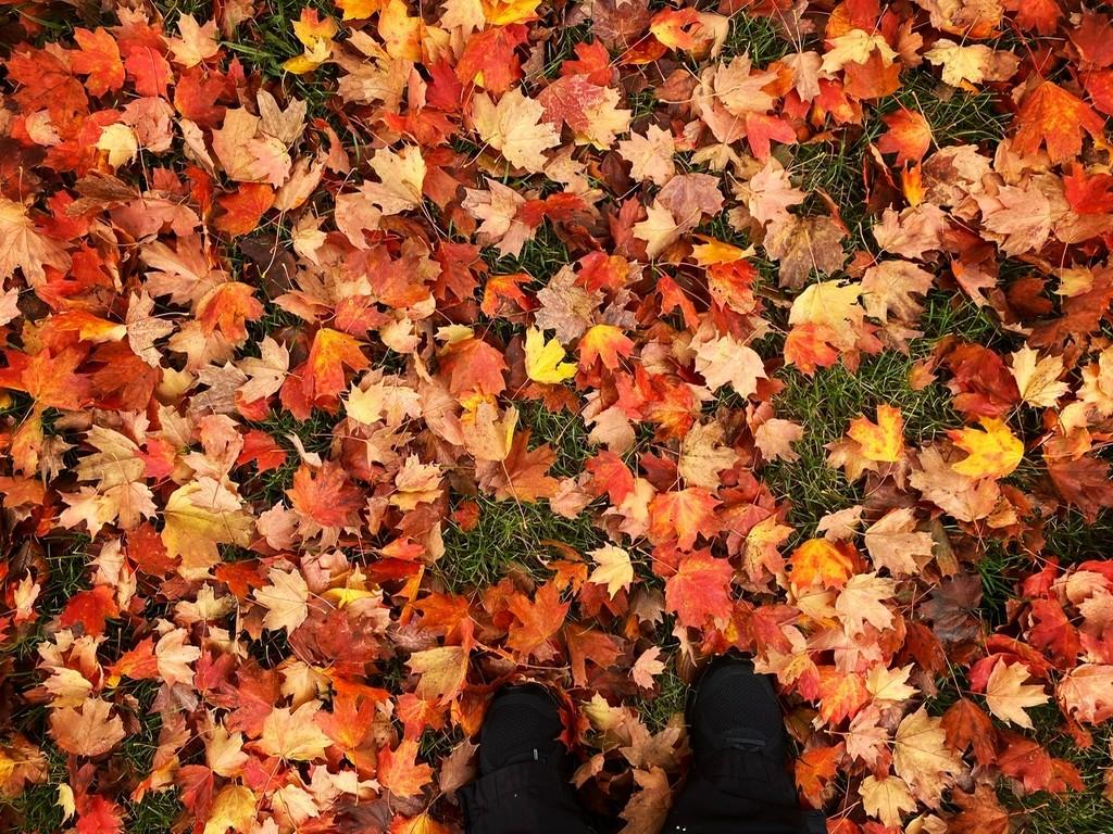 Red Carpet by rosiekerr